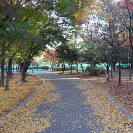산책로 - 양재 시민의숲